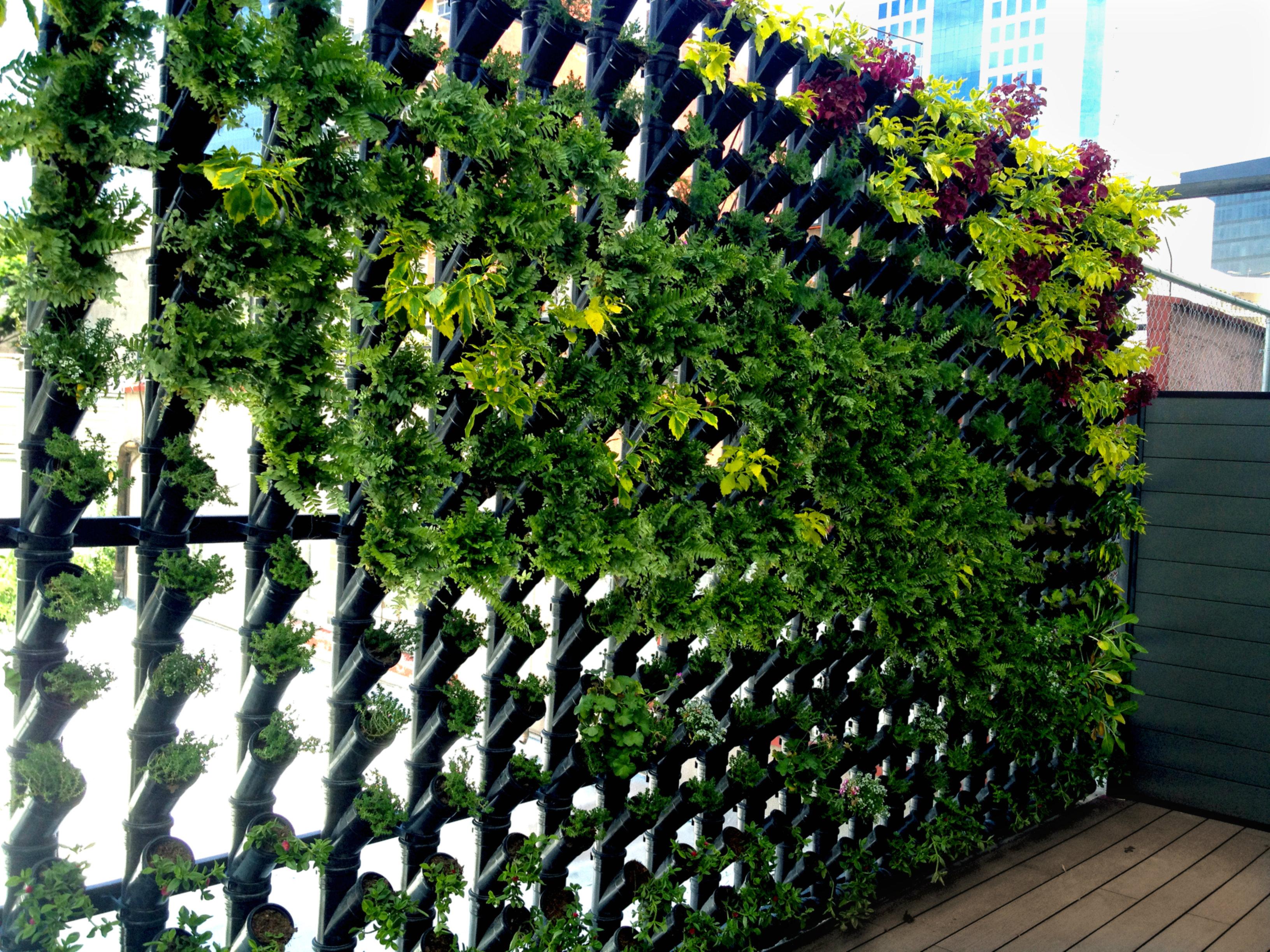 Planta ox geno muros verdes cotiza en l nea planta ox geno - Como hacer un muro verde ...