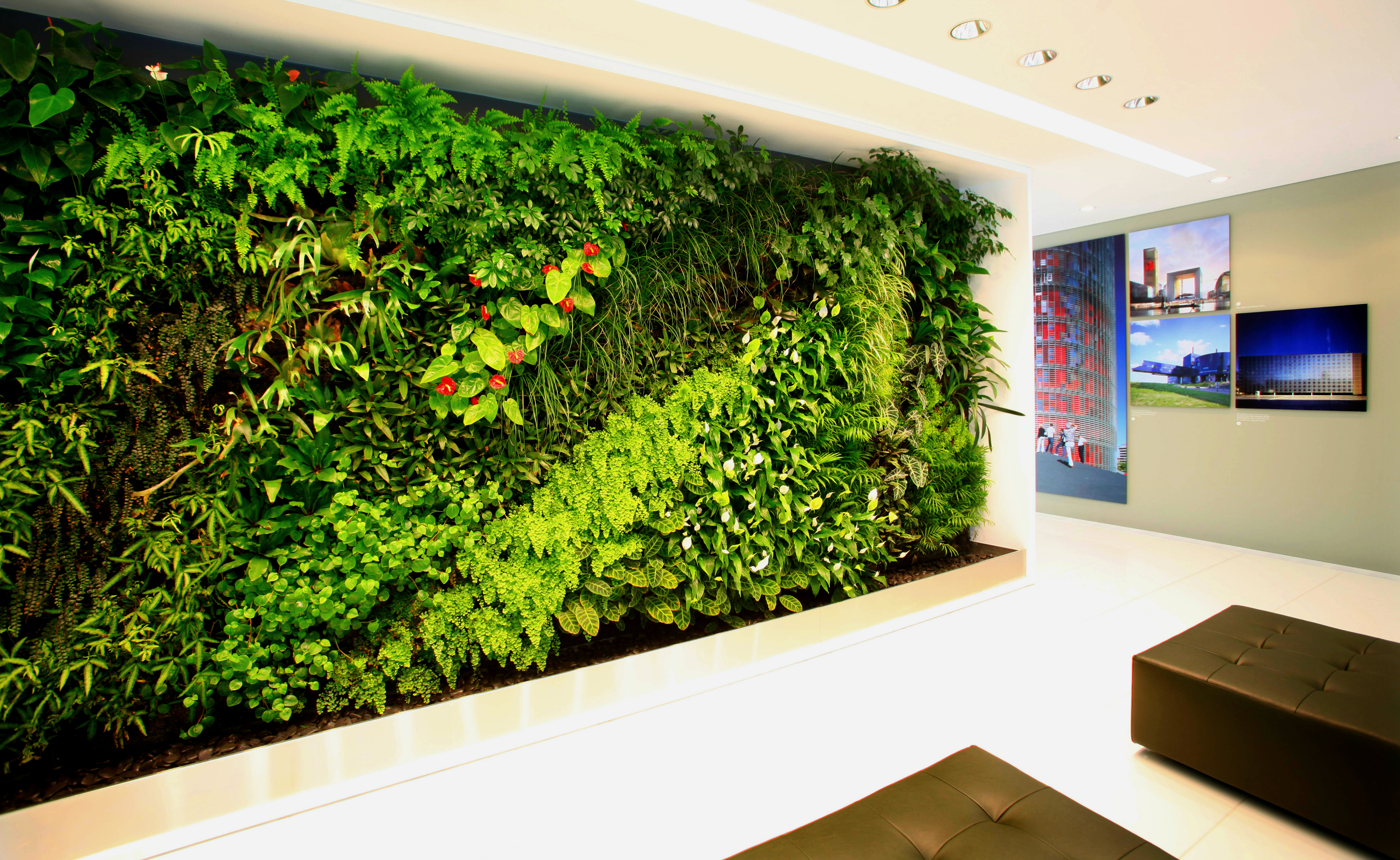 Muro verde para tu casa y oficina planta ox geno - Como hacer un muro verde ...
