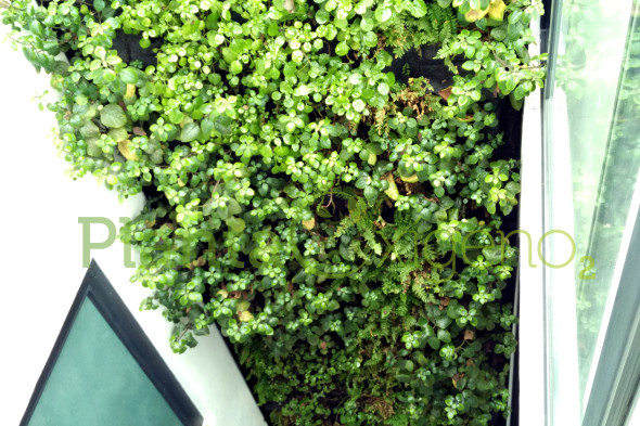 planta ox geno muros verdes cotiza en l nea planta ox geno