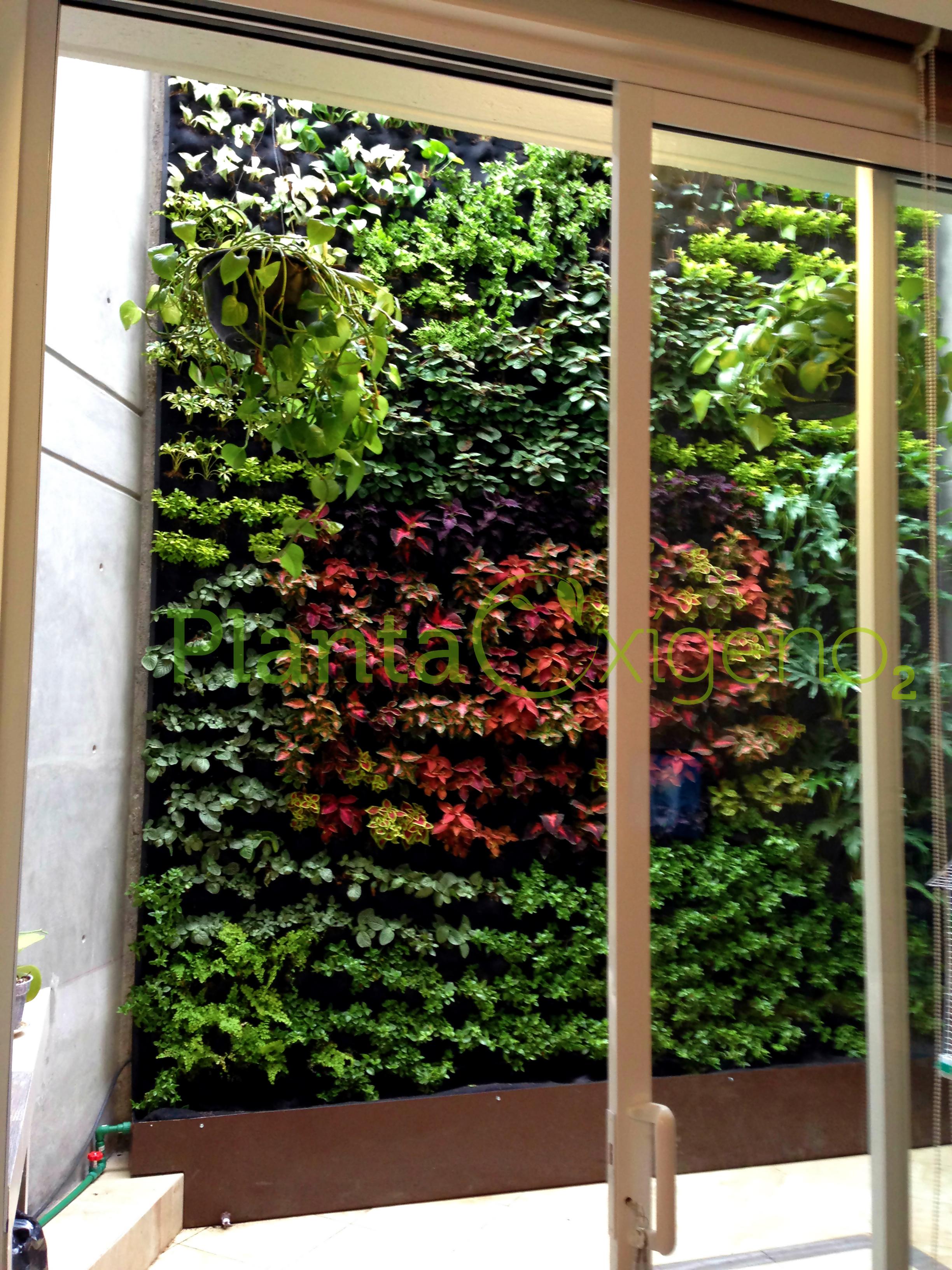 Planta ox geno planta ox geno muros verdes y azoteas verdes for Plantas muro verde