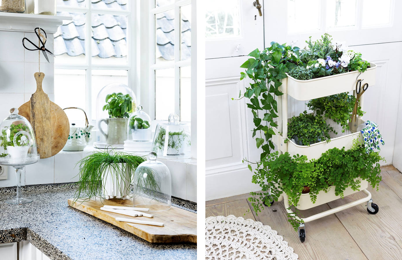 Decorar la casa con plantas de interiores for Como decorar un jardin con plantas