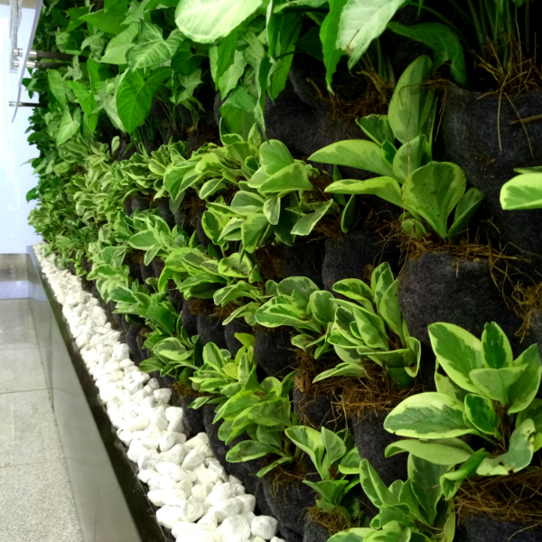 Muro verde purificador de aire