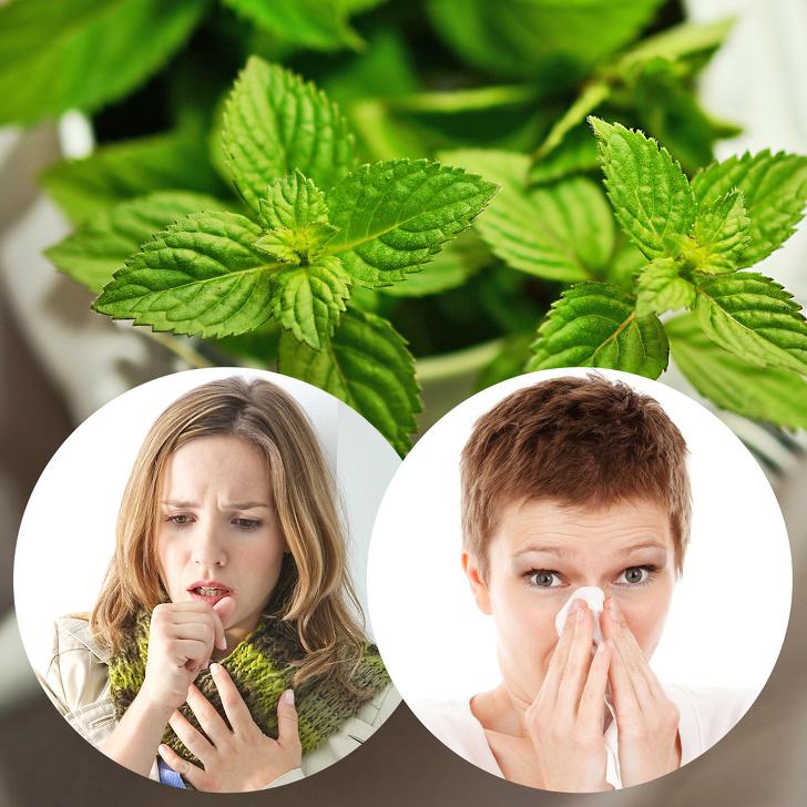 Beneficios de las plantas en la salud