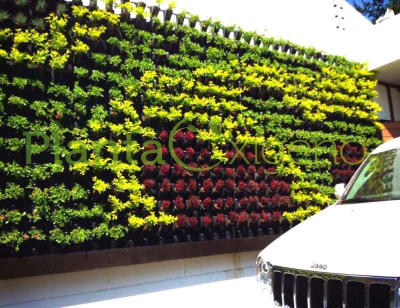 Proyectos muros verdes planta ox geno espacios con vida for Diseno de muros verdes
