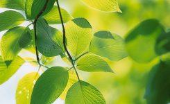 De qué forma las plantas mejoran tu calidad de vida