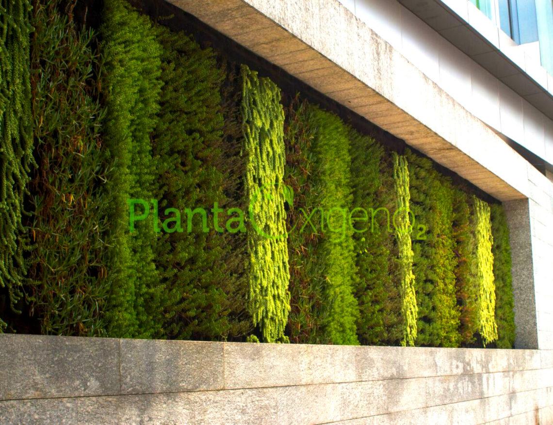 Muro verde fachada sagredo 2 cdmx planta ox geno for Materiales para un muro verde