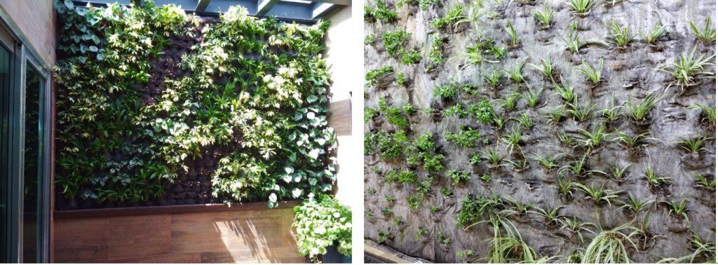 plantas densidad comparativa