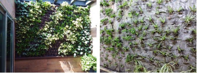 Muro verde densidad plantas
