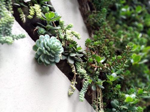 muro verde planta detalle