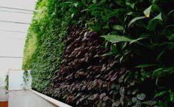 Muro Verde – 8 puntos a tomar en cuenta antes de construir