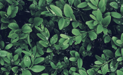 Muros verdes artificiales ventajas y desventajas