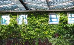 Qué son los Muros Verdes y su impacto ambiental