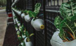 Huerto vertical: cultivando en casa, sus beneficios y tipos.