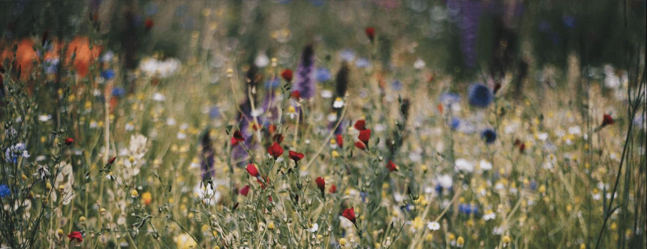 flores listas para ser polinizadas